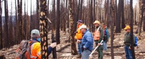 Forest managers in burned forest